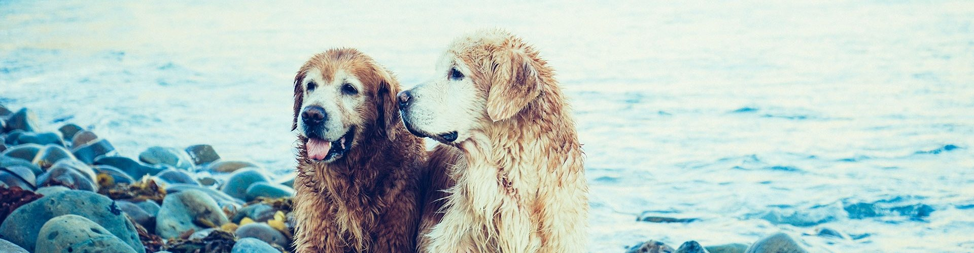 Clare Animal Welfare