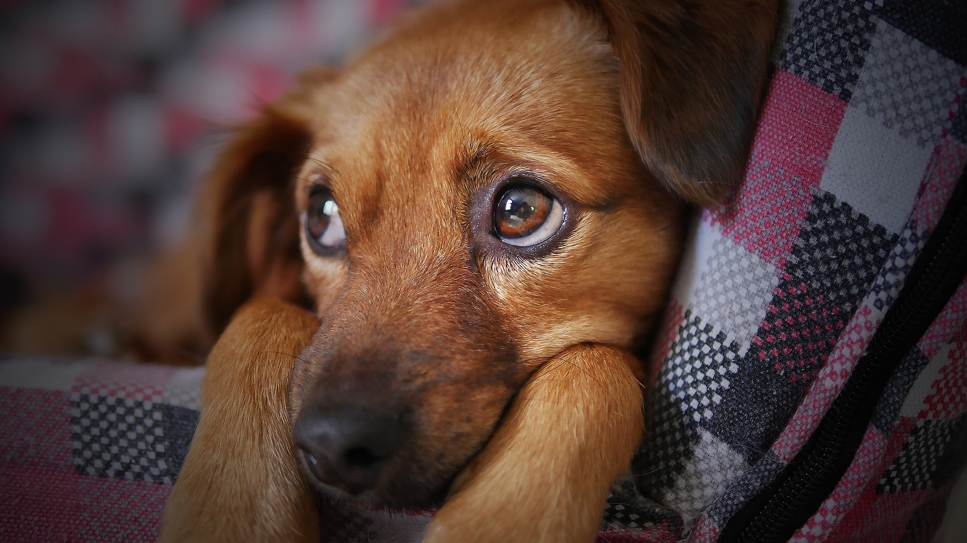 Adolescent Dogs: 6 Facts To Know